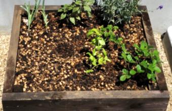 植物6-2